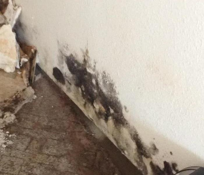 Mold Remediation Does Your Tri Cities Home Have A Mold Problem?